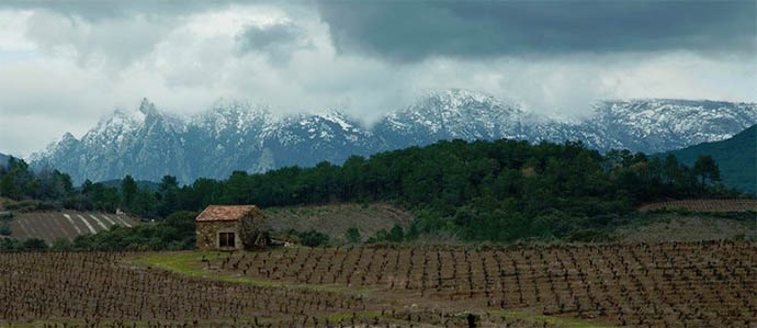 Biodynamic Wines: Growing Support for A New-Age Trend