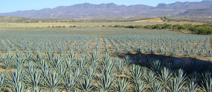 Where to Enjoy National Tequila Day in Denver