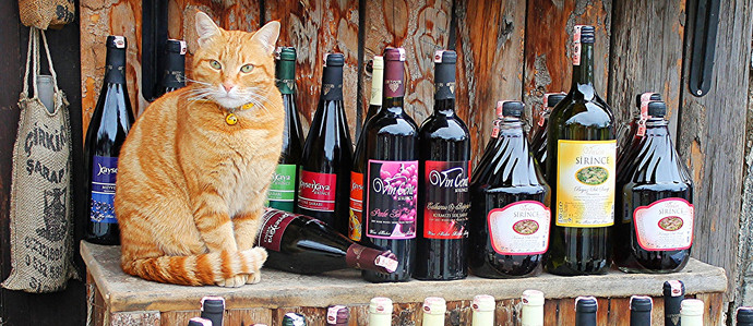 Sip Drinks, Save Cats at Pours for Paws Events Around Denver
