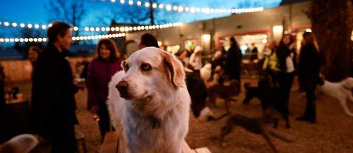 The Bark Bar is Hosting a Fundraising Party, Oct. 18