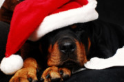 Drink Beer, Help Animals at the Denver Dumb Friends League During These Holiday Yappy Hours