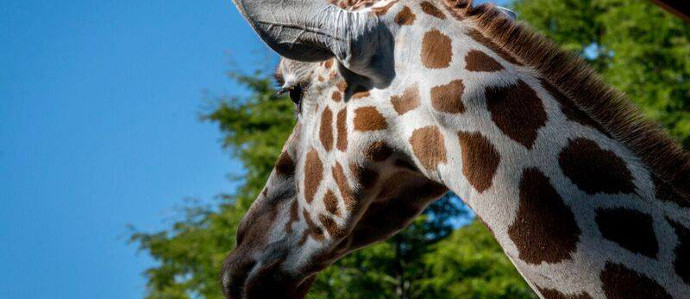 The 28th Annual Do at the Zoo Gala Is June 15