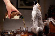 BrewDog is Releasing a $20,000 Beer Stuffed in a Taxidermied Squirrel