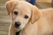 Craft Beer Denver | BrewDog Announces Puppy Parental Leave for Its Employees | Drink Denver