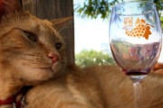 Join the Cat Care Society for Wine, Cheese, and Painted Cats, Sept. 4